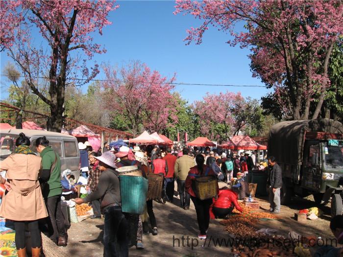 大理三月街出售的很多农产品都是村民自己种的,每到赶集的日子就运到这里来卖。红皮土豆、芋头、山药、绿豆、瓜果等品种很多,但数量不多,卖完即止。