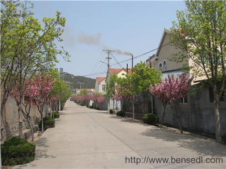 青岛王山口村图片