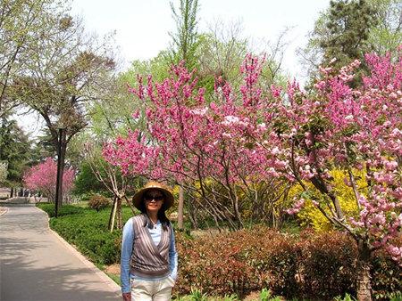 即墨墨河公园里的迎春和紫荆花