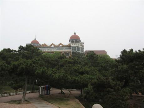 青岛汇泉湾黑松图片1