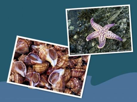 海螺和海星图片