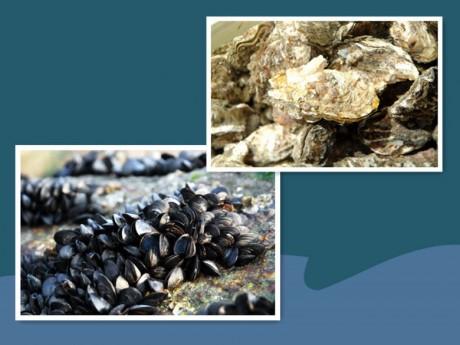 海虹和牡蛎图片