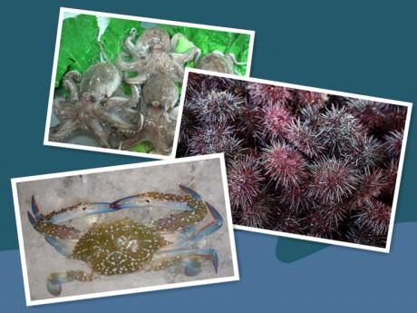 海胆章鱼和螃蟹图片