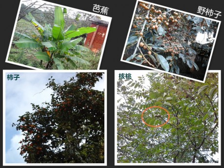 西一镇油榨村果树图片