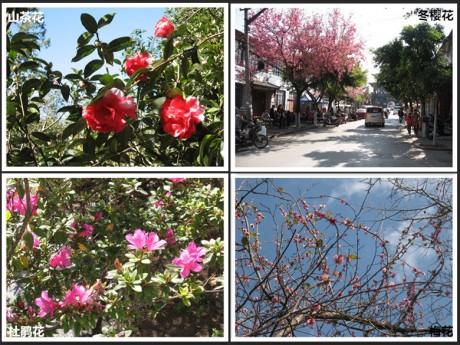 云南大理花卉图片