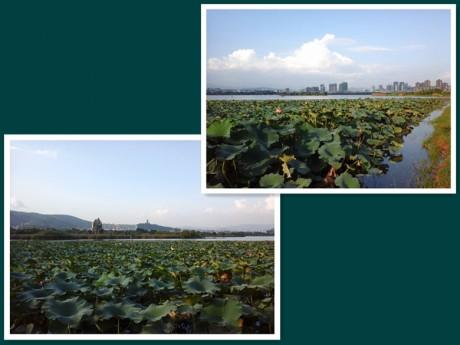 弥勒湖泉生态园图片7