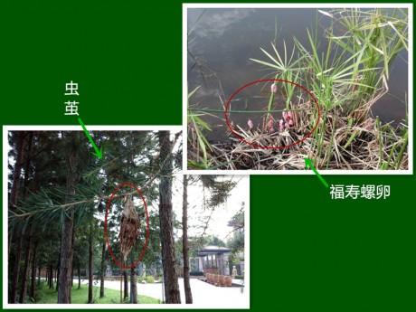 弥勒湖泉生态园图片10