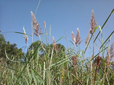 弥勒湖泉南山图片3