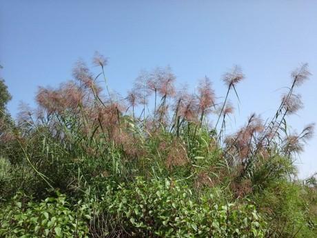 弥勒湖泉南山图片4