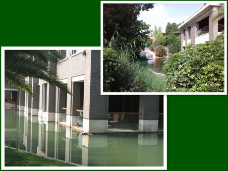 弥勒湖泉生态园野鸭图片2