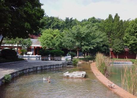 弥勒湖泉生态园野鸭图片1