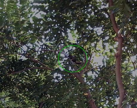 弥勒湖泉生态园松鼠图片