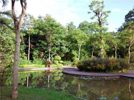 曼听公园热带植物图片1