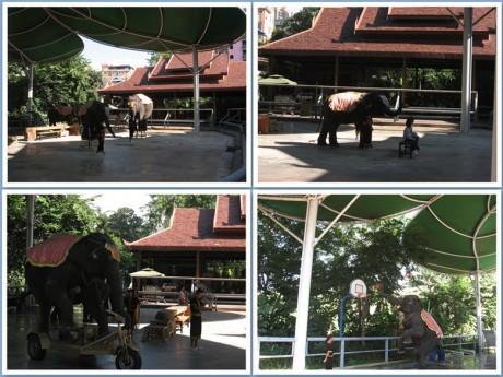 曼听公园大象表演图片