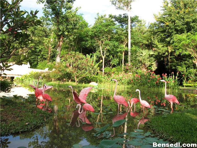 曼听公园热带植物图片2