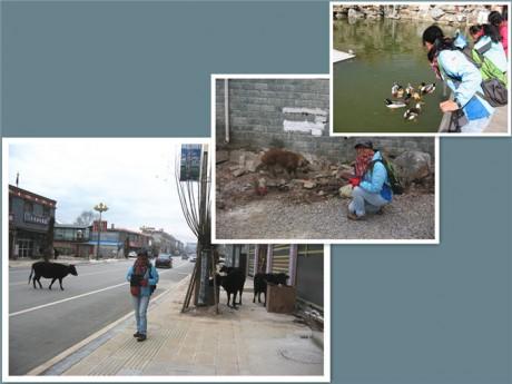 香格里拉建塘镇图片1
