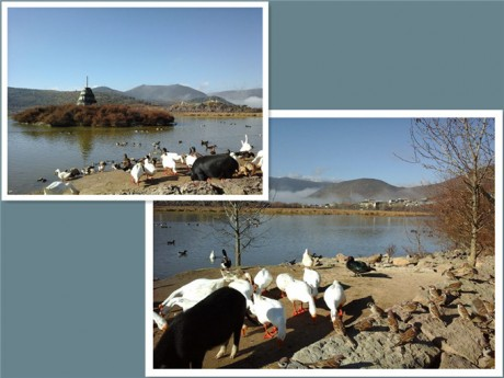 香格里拉松赞林景区动物图片1
