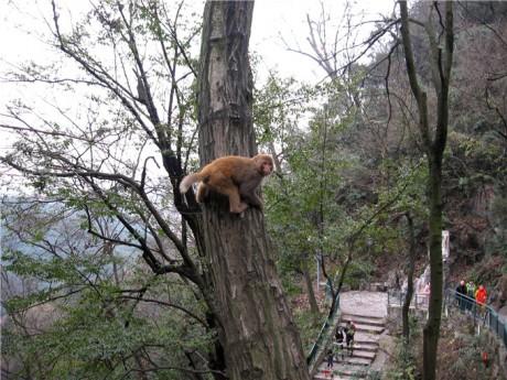 黔灵山猕猴图片1