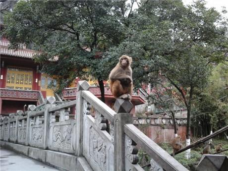 黔灵山弘福寺猕猴图片1