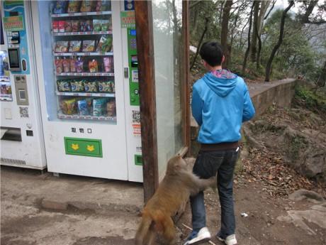 黔灵山猕猴图片2