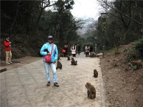 黔灵山猕猴图片3