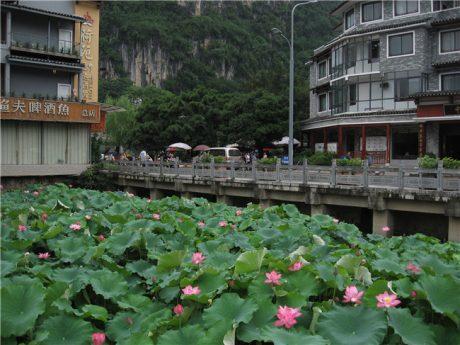 阳朔宝泉湖荷花图片1